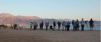 Eilat Birding Day Trip