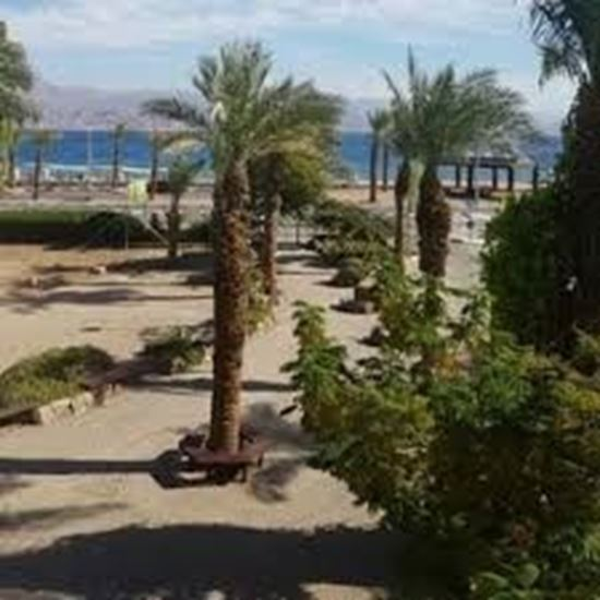eilat field school
