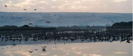 Picture for category Hula Valley