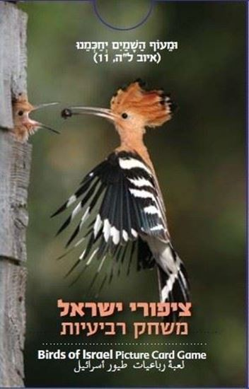 Picture of A quartet game of Israeli birds