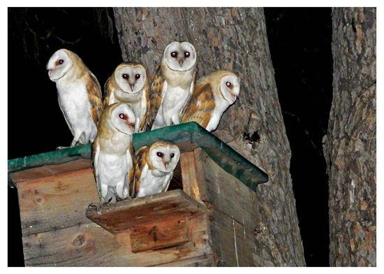 Barn Owls Project Postcards